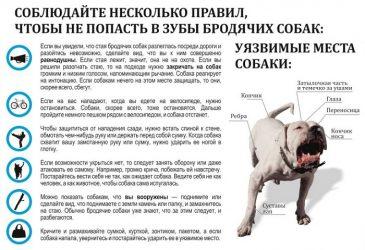 Как защититься от нападения собаки?
